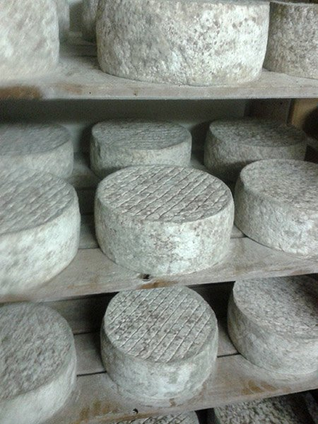 production de fromage